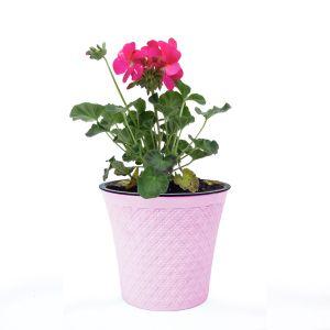 Ghiveci flori colorat SUMBUL SS100